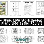 Plant Life: How Do Plants Grow?
