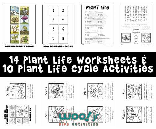 14 Plant Life Worksheets & 10 Plant Life Cycle Activities