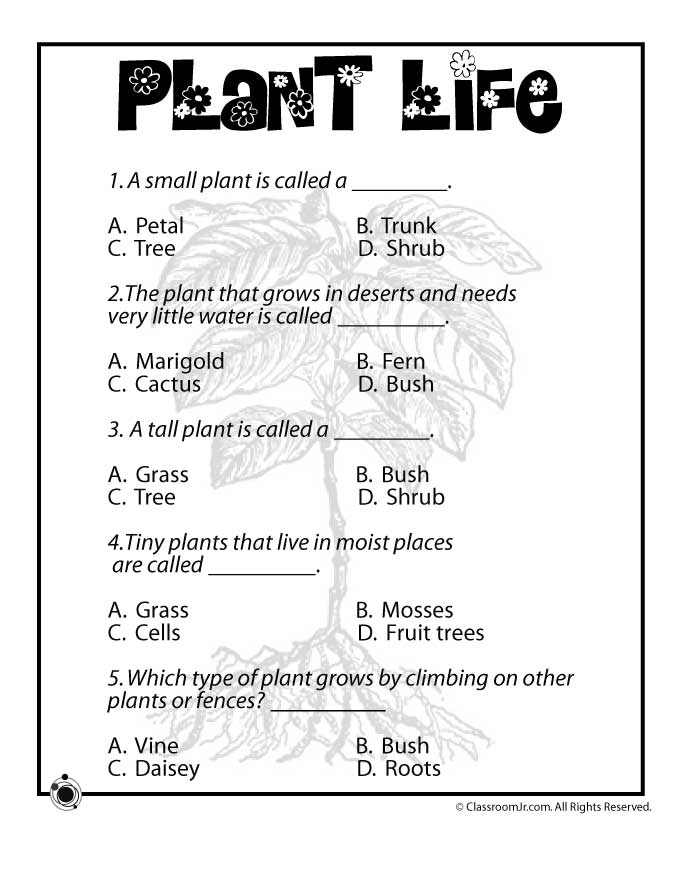 Plant Life Quiz Woo Jr Kids Activities