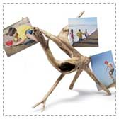 Driftwood Photo Holder