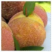 Mini Peach Cakes