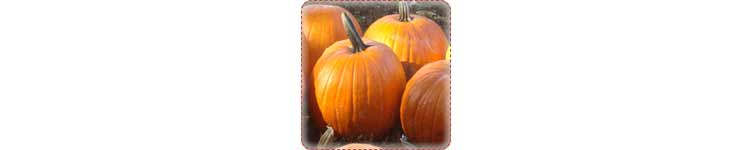 Pumpkin Patch Activity