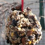 Bird Feeder Craft for Kids