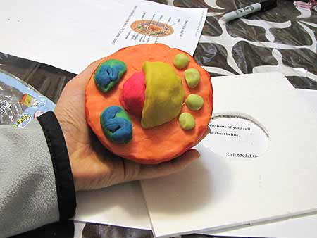 Complete Unlabeled Animal Cell Model