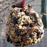 Pinecone Bird Feeder Project
