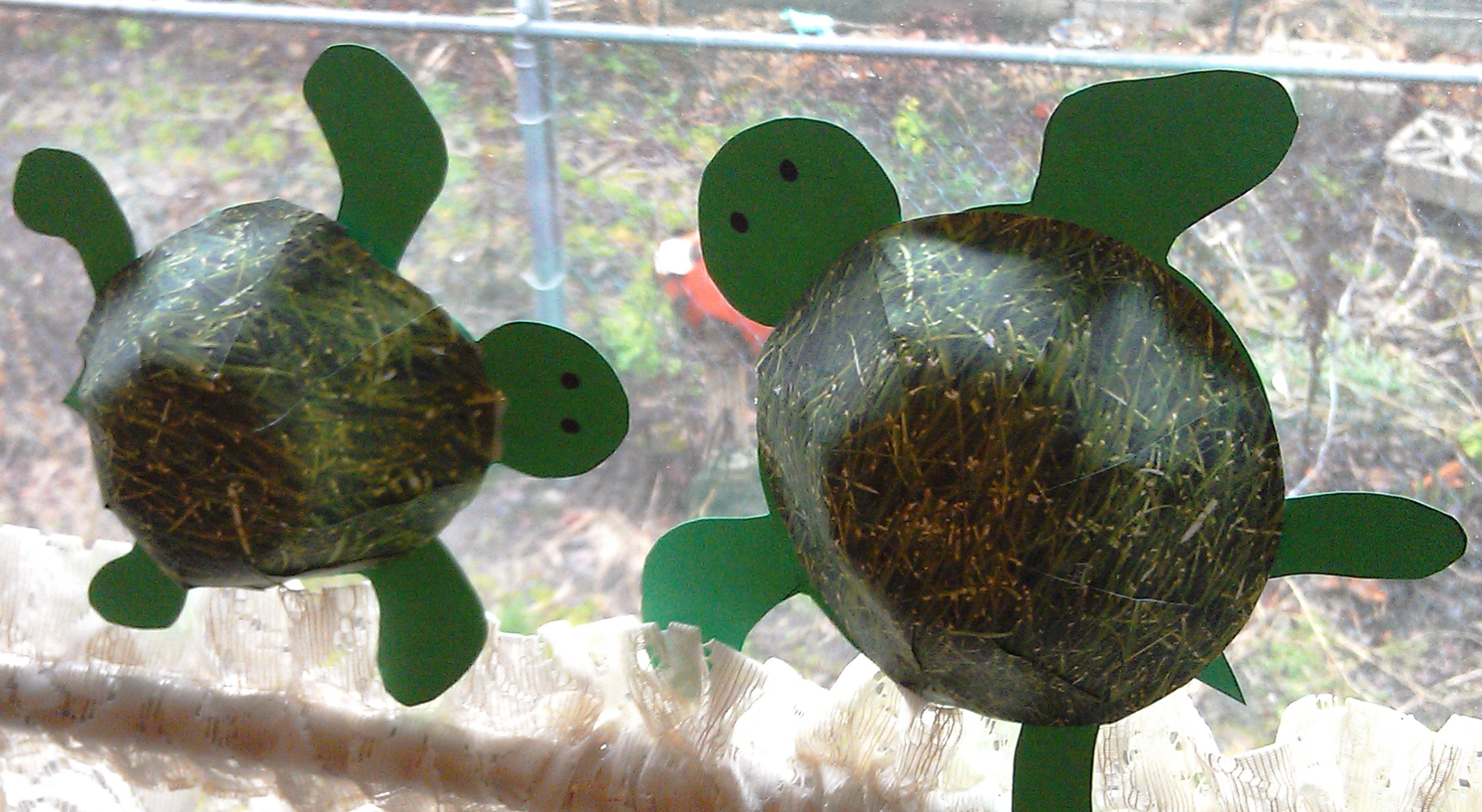 Our 3D Turtles Are Living In The Dining Room Window.