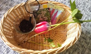 Soil, seeds, roots, and flowers in our nature observation basket.