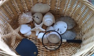 A beach theme is just one approach to take to your nature observation basket.