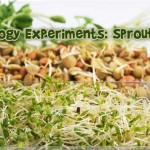Easy Kid's Biology Experiment: Sprouting Food