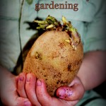 Toddler Friendly Gardening