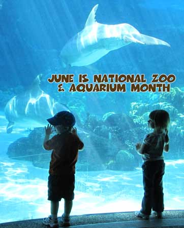 Dolphins at an Aquarium - get out to visit one in the month of June!