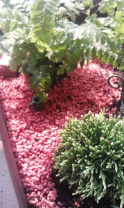 Use colored aquarium gravel to cover the soil and give your fairy garden a finished look.  This reddish gravel looked just like a miniature version of the lava rock you would find in a park.  We also used black and white to make a path through the park.
