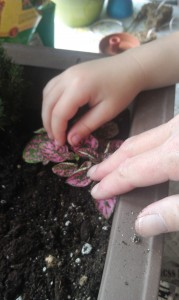 Add potting soil to cover the plants' roots and raise the level of your fairy garden to near the top of your container.