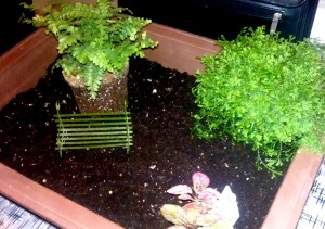Once Youu0027ve Put Your Soil Into Your Fairy Garden Container, Choose Some Of