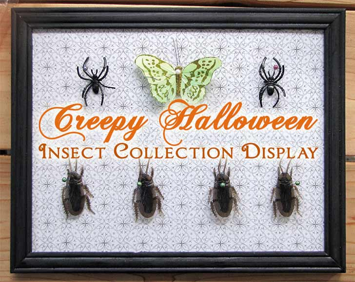 Make a Creepy Halloween Insect Collection Wall Display