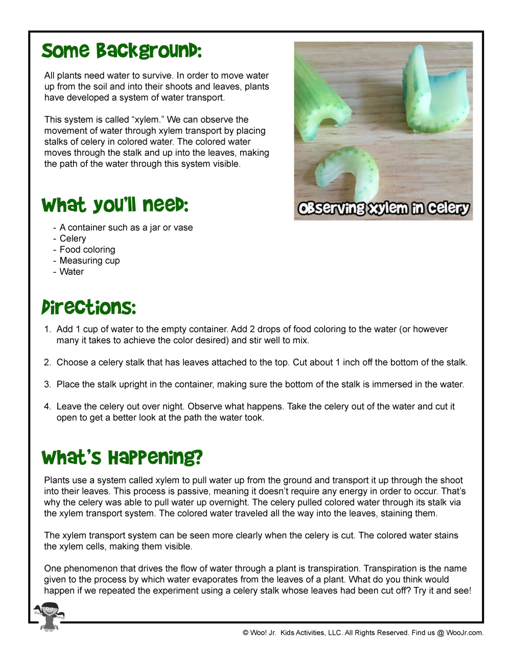 graphic about Celery Experiment Printable Worksheet called Xylem-exciting-Do-it-yourself-Science-Task Woo! Jr. Children Routines