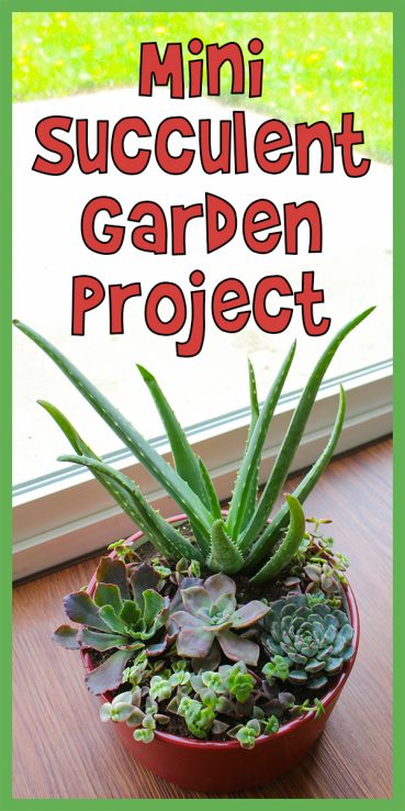 Mini Succulent Garden Project