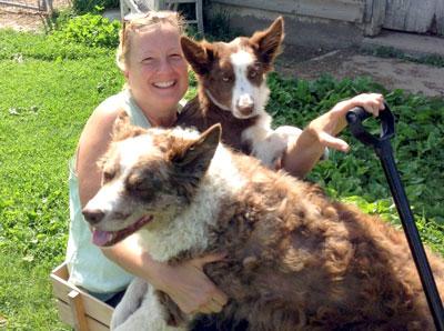 Cary's Farm Dogs