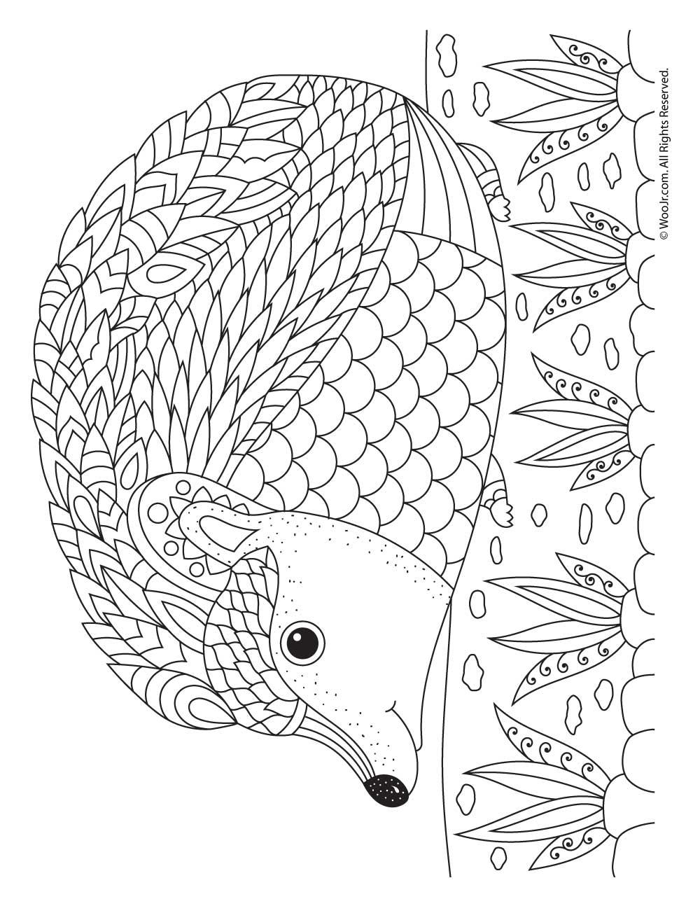 Hedgehog Adult Coloring Page | Woo! Jr. Kids Activities