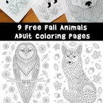 Fall Animal Adult Coloring Pages
