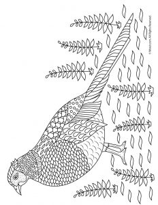 Pheasant Adult Coloring Page