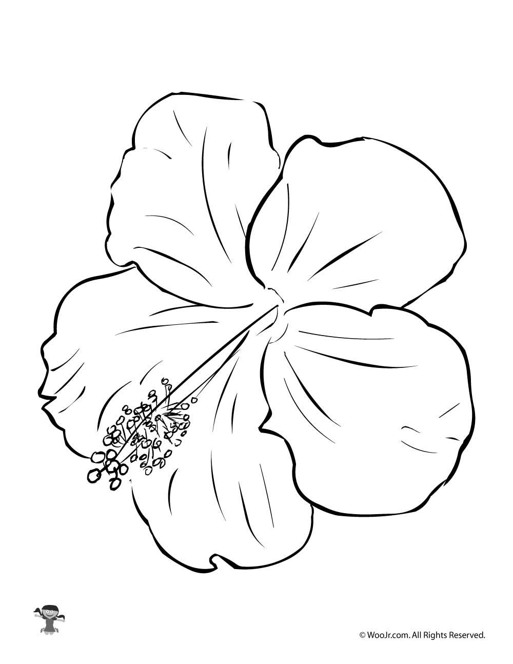 Hibiscus Flower Coloring Page Woo Jr Kids Activities