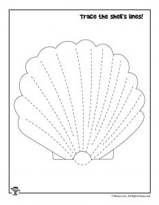 Trace the Seashell Activity