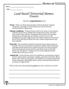 Forest Biomes Worksheet
