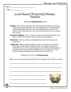 Tundra Biomes Worksheet