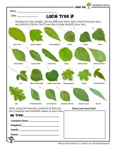 Tree Identification Worksheet