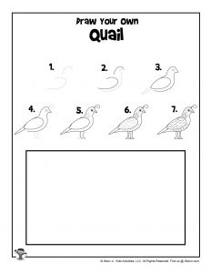 Quail Step by Step Drawing Tutorial