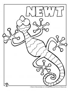 N is for Newt Coloring Page