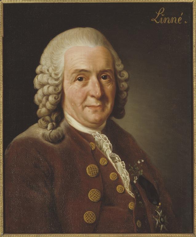 Roslin Alexander: Carl von Linné, 1707-1778.