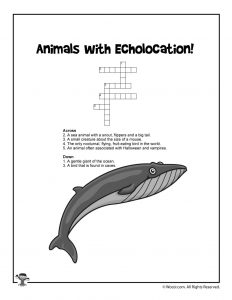 Echolocation Animal Word Puzzle Game