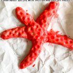 DIY Salt Dough Starfish Project