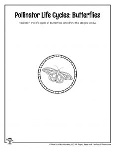 Butterfly Life Cycle Diagram Worksheet