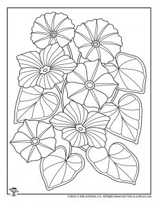 Morning Glory Flower Adult Coloring Printable