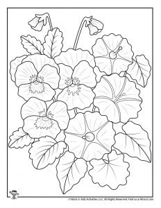 Pansy Flowers Adult Coloring Sheet