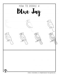 Blue Jay Drawing Steps