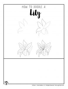 Lily Flower Drawing Tutorial for Kids