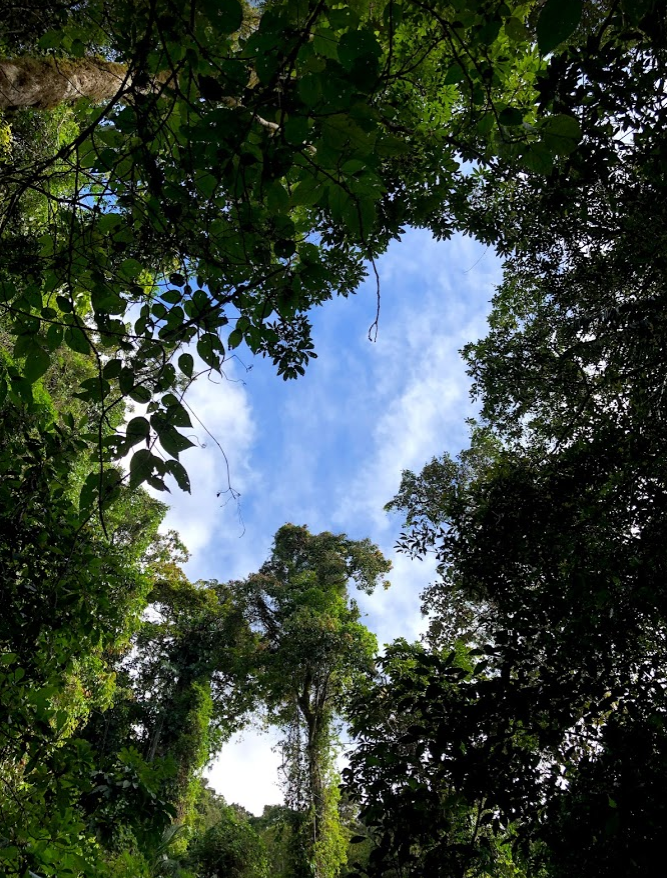 Learn about Biodiversity and Rainforests