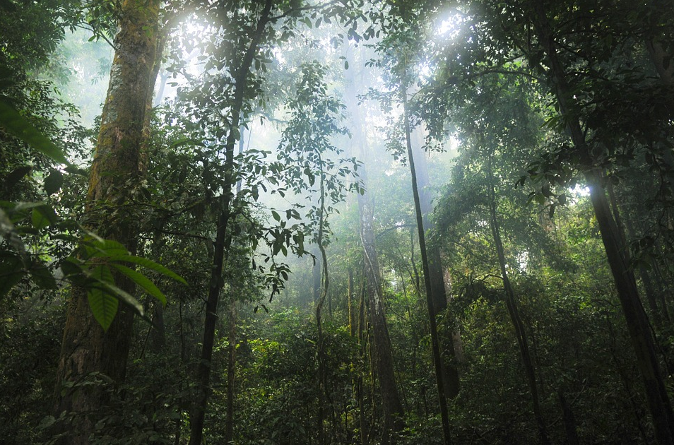 Types of Rainforests Lesson