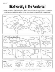 Biodiversity Rain Forest Lesson Plan Activity Worksheet