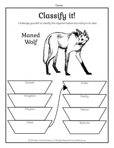 Wolf Taxonomy Classification Worksheet