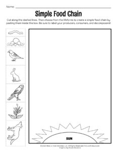 Simple Food Chain Photosynthesis Lesson Worksheet