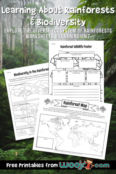 Learning About Rainforests and Biodiversity