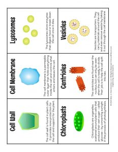 Cell Parts Science Trading Cards for Kids