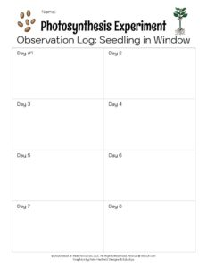 Photosynthesis Experiment Window Seeding Observation Log