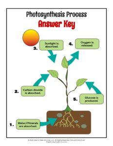 Process of Photosynthesis in Plants - ANSWER KEY