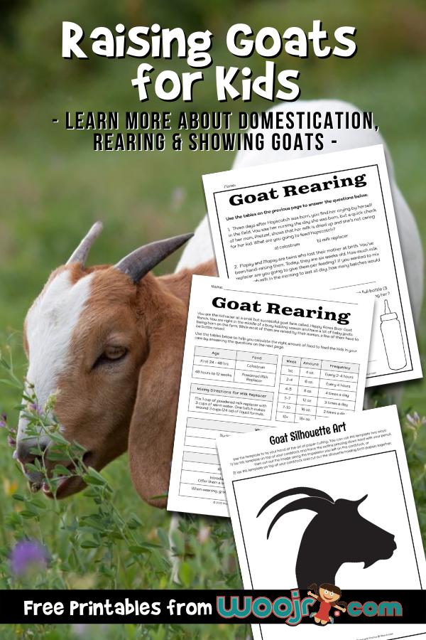 Raising Goats for Kids